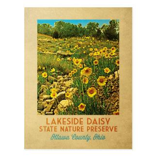 Ohio Lakeside Daisy Preserve Postcard