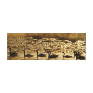 Oies sur la toile d'or d'étang enveloppée toile tendue