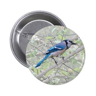 Oiseau chanteur de geai bleu macaron rond 5 cm