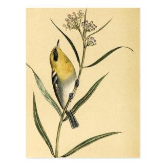 Oiseau vintage de fauvette jaune cartes postales
