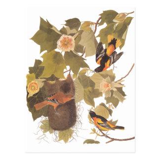 Oiseaux de Baltimore Oriole d'Audubon dans l'arbre Cartes Postales