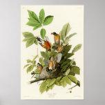 Oiseaux de Robin John James Audubon d'Américain de