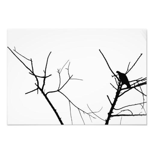 Oiseaux sur un arbre photographie d'art