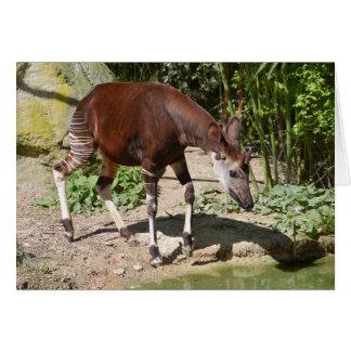 Okapi (Okapia johnstoni) near pond among vegetatio Card