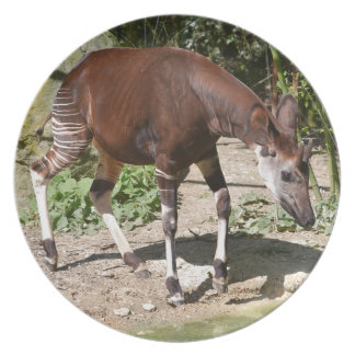 Okapi (Okapia johnstoni) near pond among vegetatio Plate