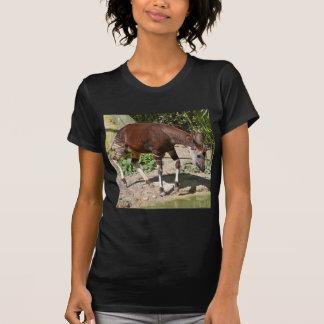 Okapi (Okapia johnstoni) near pond among vegetatio T-Shirt
