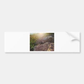 Okeechobee Lizard Bumper Sticker