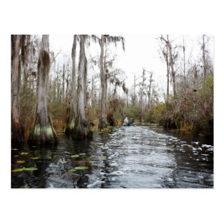 Okefenokee Swamp, Georgia Postcard