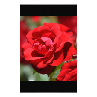 Oklahoma Rose Stationery