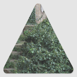 Old abandoned country homestead in the woods triangle sticker
