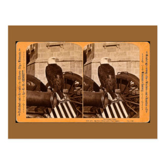 Old Abe, The Wisconsin War Eagle- Stereoview Postcard