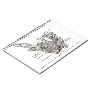 Old anatomy drawing Muscles of the Thumb sepia Spiral Note Books
