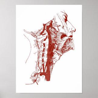 Old Anatomy Illustration Human vertebral arteries Poster
