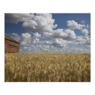 Old Barn in Wheat Field 2 Poster