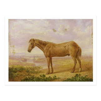 Old Billy, a Draught Horse, Aged 62 (oil on panel) Postcard