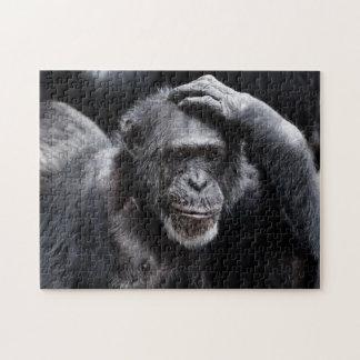 Old Chimpanzee photo puzzle