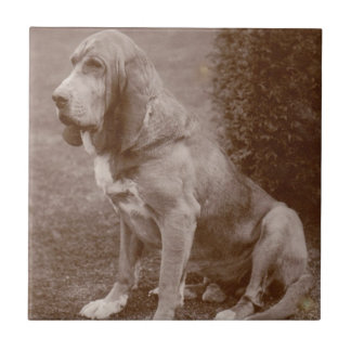 Old English Bloodhound Tile