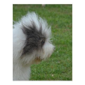 Old English Sheepdog Letterhead Template