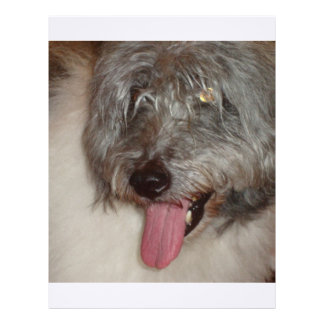 old english sheepdog.png custom letterhead