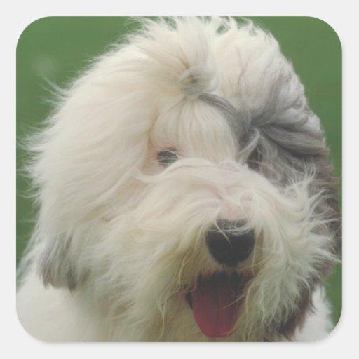 Old English Sheepdog Sticker
