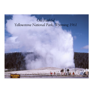 Old Faithful Yellowstone National Park Postcard