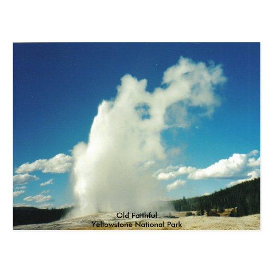 Old Faithful @ Yellowstone National Park Postcard