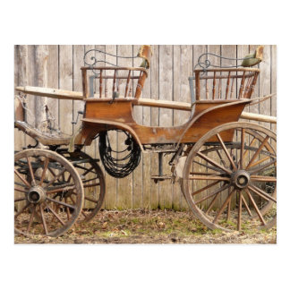 Old Fancy Horse Coach Buggy Postcard