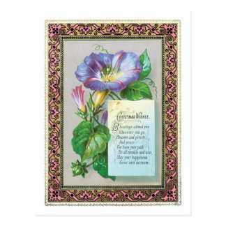 Old-fashioned Christmas, Morning glory Postcard
