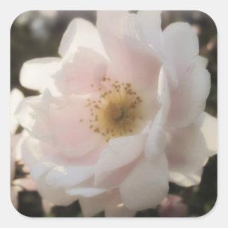 Old Fashioned Rose Square Sticker