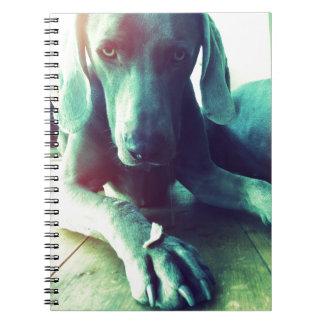 Old fashioned Weimaraner photo Notebook