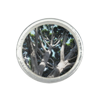 Old Fig Tree Photo Rings