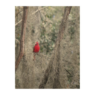 OLD FLORIDA CARDINAL Wood Wall Art