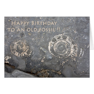 Old Fossil Greeting Card