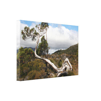 Old gnarled tree, Tasmania, Australia Canvas Print