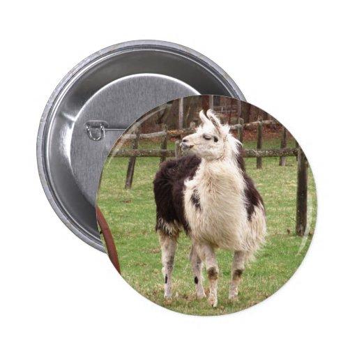 Old Llama ~ button