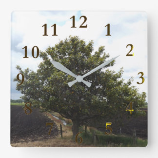 old lonely farm tree square wall clock