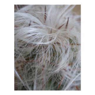 Old Man Cactus Letterhead