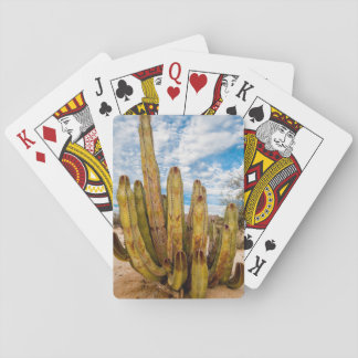 Old Man Cactus portrait, Mexico Playing Cards