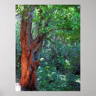 Old Mango Tree Poster