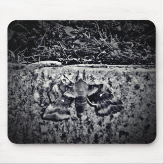 Old moth photo mouse pad