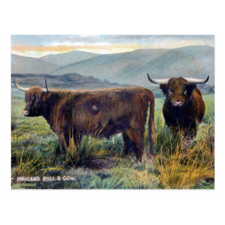 Old Postcard - Highland Cattle