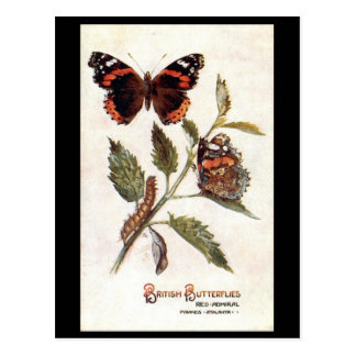 Old Postcard - Red Admiral