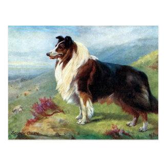 Old Postcard - Scotch Collie