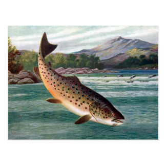 Old Postcard - Trout