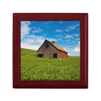 Old, red barn in field of chickpeas trinket box