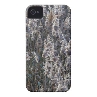 Old reed grass on a winter day. iPhone 4 covers