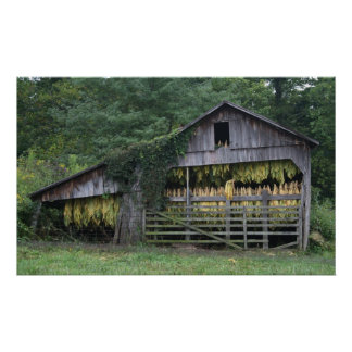 Old Tobacco Barn Poster