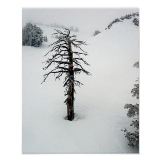 Old tree at Mt. Bachelor Poster