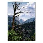 Old Tree at Yosemite Greeting Card