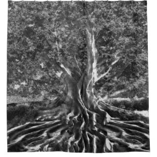Old Tree in Black and White